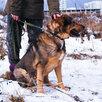 Мишутка ищет дом  по цене даром - Собаки, фото 3