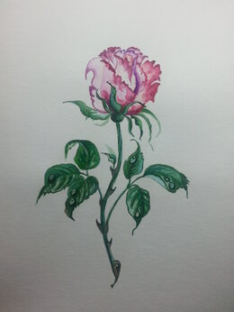 "Рисование - Картина акварель ""Роза"", 0"