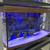 Аквариум 600 литров панорамный. Новый. Гарантия 5 по цене 32000₽ - Аквариумы, террариумы, тумбы, фото 2