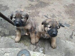Собаки - Нужен дом щенкам, 0