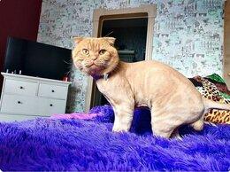 Груминг и уход - Стрижка кошек - гигиена кошек, 0