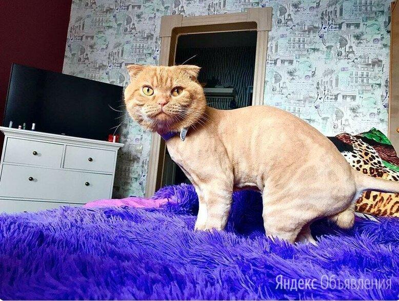 Стрижка кошек - гигиена кошек по цене 500₽ - Груминг и уход, фото 0