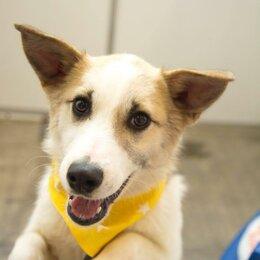 Собаки - Красавица Ханна ищет самую любящую семью, 0