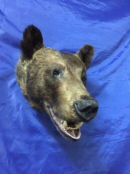 Рога, шкуры, чучела животных - чучело головы медведя., 0