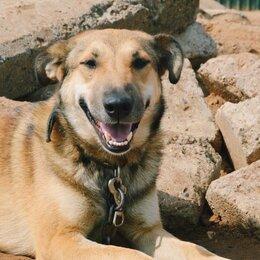 Собаки - Собака Улыбка, 0