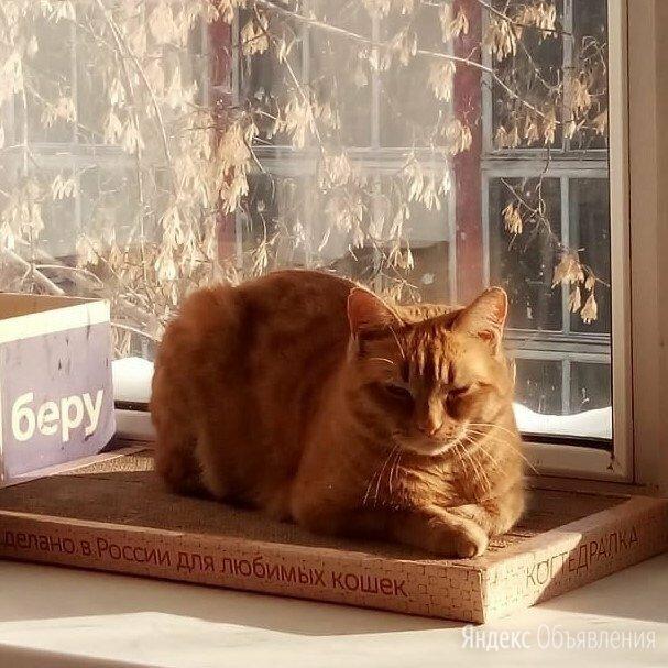 Рыжая кошка в добрые руки по цене даром - Кошки, фото 0