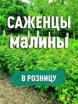 Рассада, саженцы, кустарники, деревья - Саженцы малины. В розницу, 0