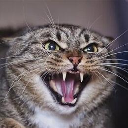 Кошки - Кот в добрые руки, 0