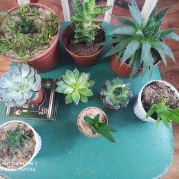 Комнатные растения - суккуленты алоэ гастерии хавортии итд, 0