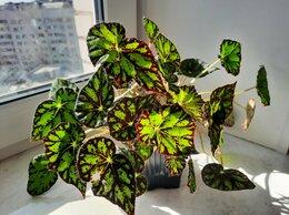 Комнатные растения - Растения для офиса и квартиры, 0