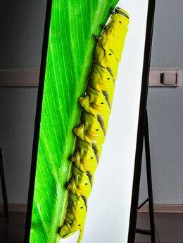 Рекламные конструкции и материалы - Штендер световой , 0