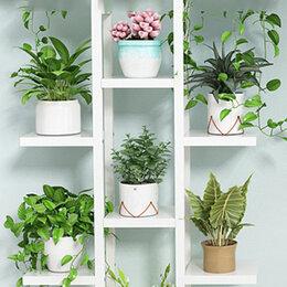 Комнатные растения - Комнатные растения Челябинск, 0