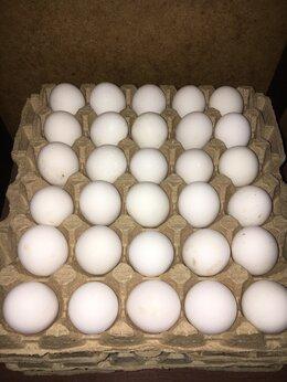 Продукты - Домашние куриные яйца , 0