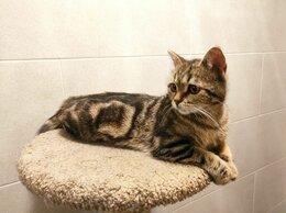 Кошки - Потрясающая стерилизованная кошечка, 0
