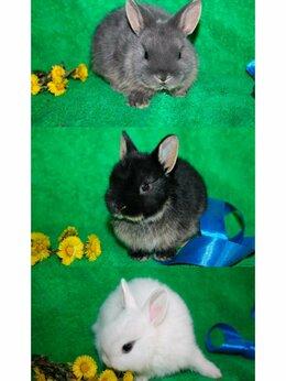 """Кролики - Вислоухие кролики и миноры- питомник """"Тихон"""", 0"""