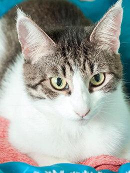 Кошки - Рукавичка – кошка, спасенная зимой из…, 0