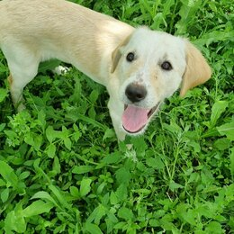 Собаки - Щенки дратхаара, 0