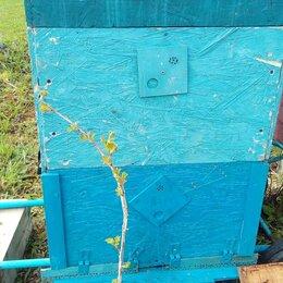 Сельскохозяйственные животные и птицы - Пчелы в улье, 0
