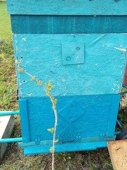 Сельскохозяйственные животные - Пчелы в улье, 0