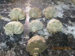 Декорации для аквариумов и террариумов - Морские ракушки, камни и грунт для аквариума и…, 0