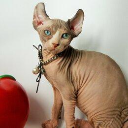 Кошки - эльф кошечка красотка для вас, 0