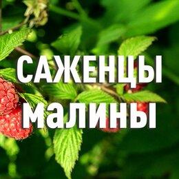 Рассада, саженцы, кустарники, деревья - Саженцы малины. С доставкой, 0