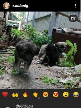Животные - Собака, 0
