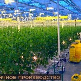 Производство -   Продаётся в Крыму Теплично Агропромышленное Хозяйство, 0