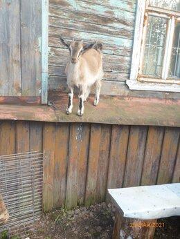 Сельскохозяйственные животные - Козленок, козочка., 0