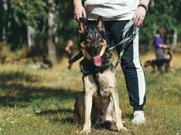Собаки - Немецкая овчарка Султан в дар, 0