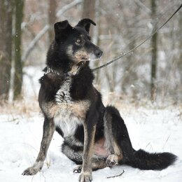 Собаки - Собака Найда, 0