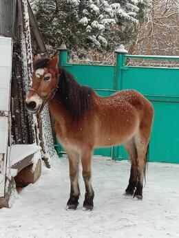 Лошади - Продается конь. , 0