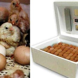 Товары для сельскохозяйственных животных - Бытовая техника для яиц инкубатор автоматический, 0