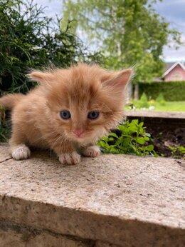Кошки - Котенок, котята в дар, 0