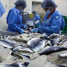 Разнорабочие - Разнорабочие на рыбное производство (вахта в Московской области), 0