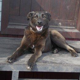 Собаки - Умная собака Рада, 0