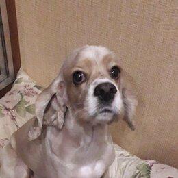 Услуги для животных - Стрижка собак на дому. , 0