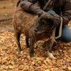 Мелкаш. Небольшая и добрая собачка ищет дом!!! по цене 5₽ - Собаки, фото 11