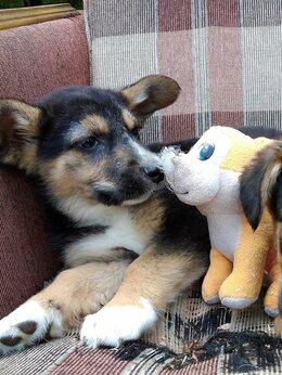 Собаки - Щенок, щенки в добрые руки , 0