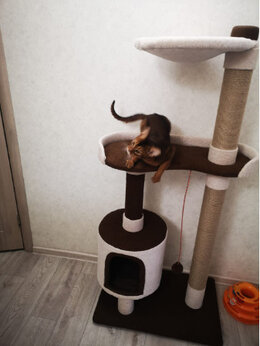 Когтеточки и комплексы  - игровые комплексы для кошек, 0