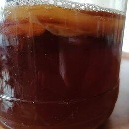 Ингредиенты для приготовления напитков - Гриб чайный-лечебный(медузомицет), 0