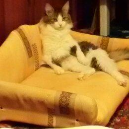 Лежаки, домики, спальные места - Лежак-когтеточка для кошки, 0