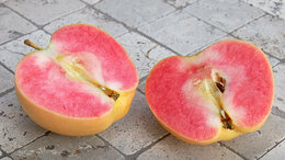 Рассада, саженцы, кустарники, деревья - Яблоня розовый жемчуг, 0
