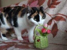 Кошки - Кошка Ряженка, 0