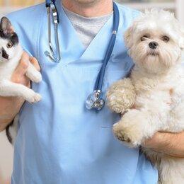 Груминг и уход - Ветеринарный врач вызов на дом г. Орел, 0