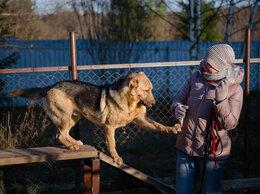 Собаки - Бим ищет любящую семью! Москва и МО!!!, 0