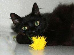 Кошки - Роскошная Роксана. Пушистая кошка в добрые руки., 0