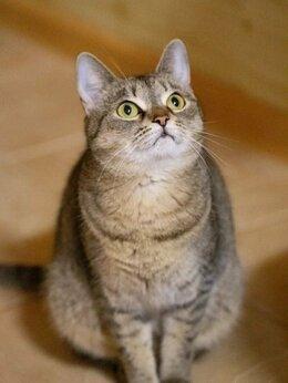 Кошки - Серенькая плюшечка Дарина. Лесной приют, 0