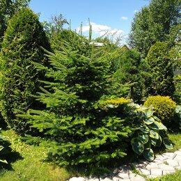 Рассада, саженцы, кустарники, деревья - Саженцы различных растений на выбор, 0