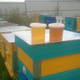 Продукты - Мёд, Липа с разнотравьем. , 0